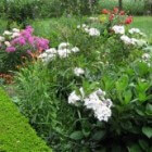 Een groene tuin is een oase van rust voor lichaam en geest