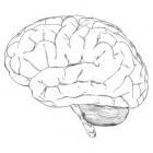 Vitaminen en mineralen die de cognitieve functies stimuleren