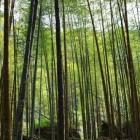Kleding van bamboe: de voor- en nadelen