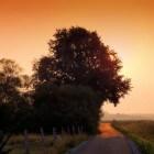 Genezende bomen