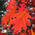 De herfst gezond doorkomen volgens de oosterse geneeskunst