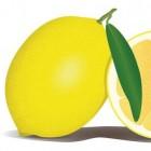 Alles over de citroen