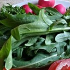 Rucola Drankje, energiedrank van spinazie en darmreiniger
