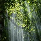 Wat is de betekenis van zen-zijn?
