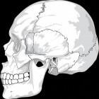 Syndroom van Crouzon: vroegtijdige samengroei schedel
