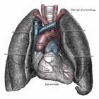 Wat is het verschil tussen astma en bronchitis?
