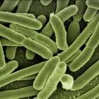 Gnathostomiasis: infectie veroorzaakt door rondwormen