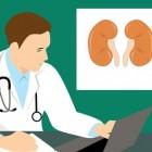 Nieren en urinewegen: antidiuretisch hormoon (ADH)