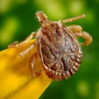 Jaren dokteren met Lyme: het verloop van de ziekte van Lyme