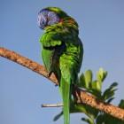 De papegaaienziekte bij dier en mens