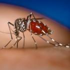 Zika-virus: gevolgen voor zwangere vrouw en baby