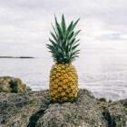 Zwanger en ananas