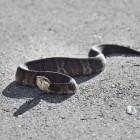 Gifslangen en hun beet