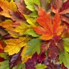 Voorlezen over de herfst bij dementie: verhalen, gedichten