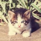 Hondenbeet en kattenbeet: behandeling, tetanus en infectie