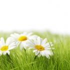 Homeopathie bij nervositeit
