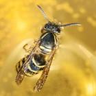 Acarofobie, angst voor kleine insecten: symptomen, oorzaak