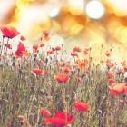 Allergie voor grassen en boompollen