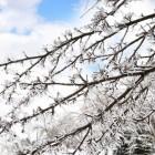 Hooikoorts in februari en maart: kan dat?