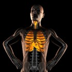 COPD: Longemfyseem