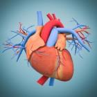 Het kloppende hart - hartziekten