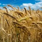 Coeliakie en regelgeving: 'kan sporen van gluten bevatten'