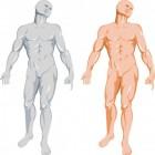 Aangeboren genitale afwijkingen bij de man