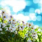 Homeopathische middelen bij lentekwaaltjes