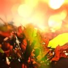 Homeopathische middelen bij herfstkwaaltjes