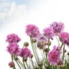 Homeopathie bij braken (overgeven) en misselijkheid