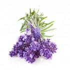 Lavendel en Edelstenen: Natuurlijke gezondheid