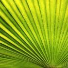 Kokosolie: veelzijdig en gezond