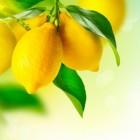 Afvallen met een citroenzuur helpt!