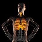 Hoe werken de longen?