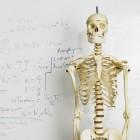 De botten van het menselijk lichaam