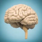 Slapen om je hersenen te beschermen