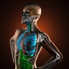 Ademhaling: hardlopen, baby, meten