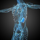 Adrenaline: functie, werking en bijwerkingen als medicijn