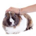 Konijn: konijn heeft een fijne smaak en is licht
