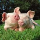Biologisch voedsel eten is gezonder en beter voor dieren
