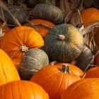 Gezonde seizoensgroenten: wintergroente