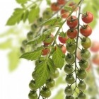 Gezonde voeding: tomaten