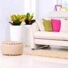 Verbeter je gezondheid met luchtzuiverende planten in huis