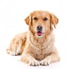 Een hond voor een gezonde levensstijl