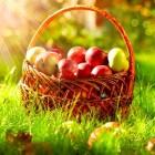 Gezondheid: Vier de lente!