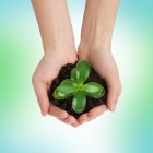 Homeopathie, fytotherapie en reguliere geneesmiddelen
