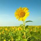Vitamine D en zonlicht