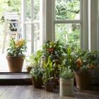 Mag men planten plaatsen in de slaapkamer?