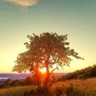De levensboom, schakel tussen hemel en aarde