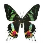 Vlinderziekte, de ziekte Epidermolysis Bullosa